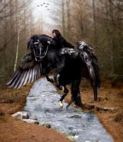 Charlotte and the Black Pegasus by mistysteel