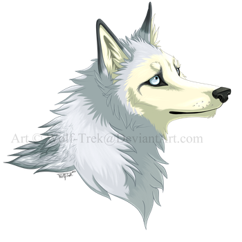 Ayip Headshot by Wolf-Trek