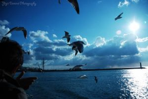 Seagull and Mosque by tahaerakay