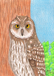 Short Eared Owl -Donation Commission by TornFeathers