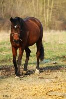 Cheval by EliseJ-Photographie