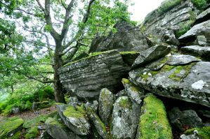 Stone and moss by carlnewton