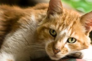 Rusty Cat by 3hanphoto
