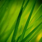 Brin d'herbes by Somebody--else
