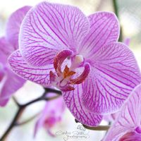 Orchid Square by CandiceSmithPhoto