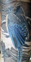 blue jay wip second session by lefey23