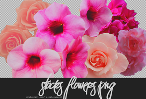Stocks Flowers PNG by a-Galaxysweth