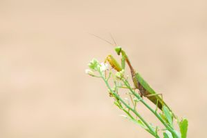 Mantis by ZahirBatin