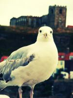 sea gully gull. by ToniTurtle