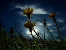 Reaching For The Sun by Bazz-photography