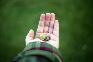 snails. by BlackDennie