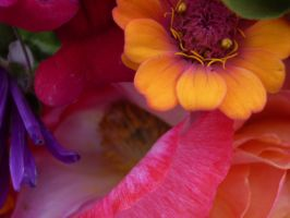 flower colors by Eris-stock