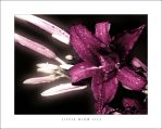 Little Glow Lily by curtg