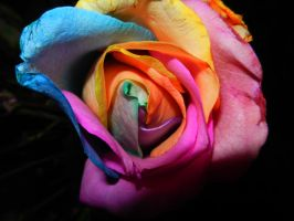 psychedelic rose 1 by rori77