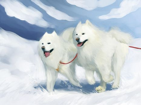 Samoyed by Kana-dez