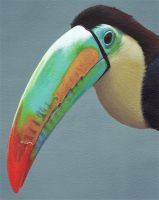 Tucan... by taurus1977
