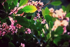 Flowers II by TLL-MatheX
