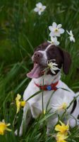 Flower Dog by VincentPhotography