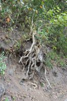 Shrub with visible roots by A1Z2E3R