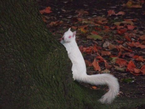 Albino Squirrel by SymphonyOfSolace