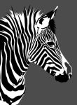 Portrait of a zebra by G-Smilodon