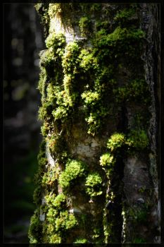 moss by acspear