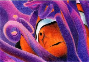 Clownfish by LauraMel