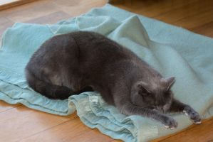 Micky sleeping on the dogs bed by dottys-friend