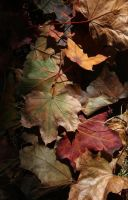 Pile o' fallen leaves... by 7DS7