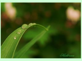 Waterdrops by Nach4ever
