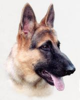 German shepherd dog by ArnaTornwolf
