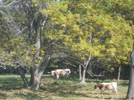 Texas Longhorns by irrationalrationale