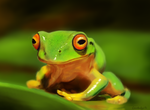 Frog by Cannibalus