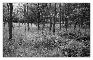Colorless woods by leavenotrase