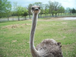 Ostrich saw what you did thar by ahinatafan