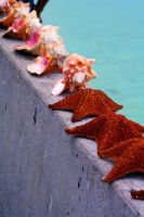 Conch shells and starfish II by cypherstock