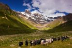 Elbrus and Yaks by DeingeL