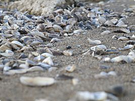Sea Shells by MaddLouise