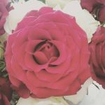 Perfect rose by Rho96
