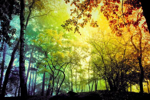 forest light by BaxiaArt