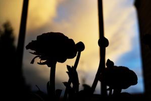 a bloom in the shadows by chanmanthechinaman