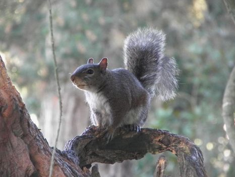 Squirrel Perched by Hippoflakes