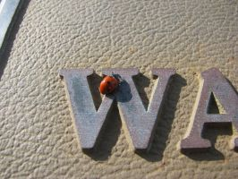 Ladybug in Waldport 3 by Cyberpriest