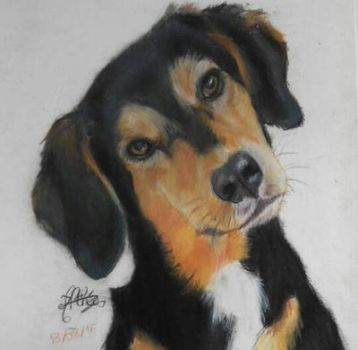 Dog drawing with soft pastel by AltheaWorld