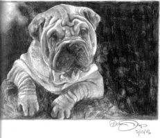 Shar Pei by clouded-ambition