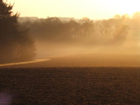 Morning Mist, ploughed field by Annelisa-Views