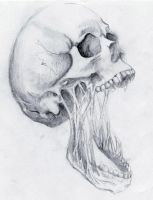 skull draw by Kartphotos