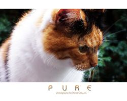 Pure by Syntik
