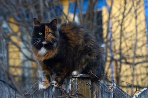 Two faced cat by GuillaumGibault