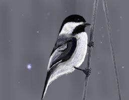 Winter Chickadee for Tina by davincipoppalag